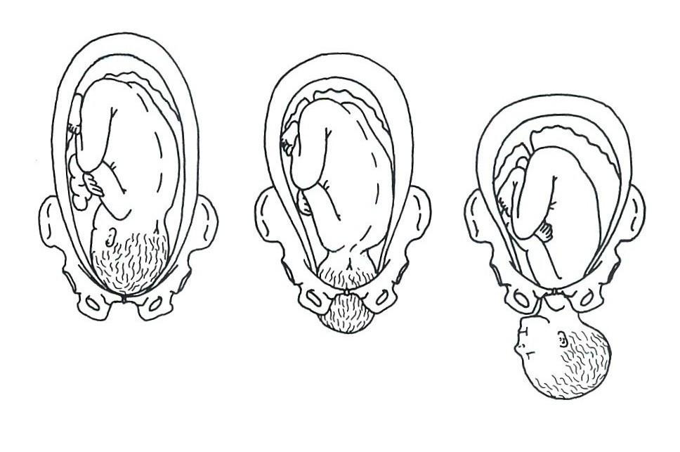 fasen geboorte